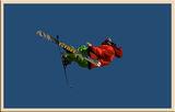 Сноуборд'София 2009 ; comments:15