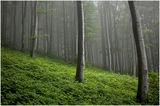 В дън гори мъгливи.... ; comments:34