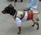 И кучетата участват във фолклорен фестивал !!!! :)))) ; comments:8