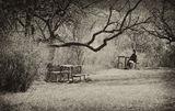 Когато си сам и мисли нахлуват.... ; comments:70