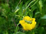 Зелено на жълто ; comments:15