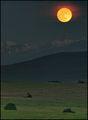 Луната издигаща се над Рила планина голямата и няколко  храста на полянката,осветена от остатъка на отиващия си ден ; comments:37