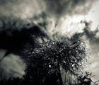 Под дъжда...... ; comments:29