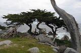 Пейзаж с живи и мъртви дървета ; comments:7