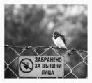 Bird security ; comments:24