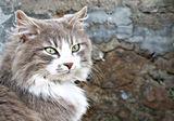 котешки портрет ; comments:1