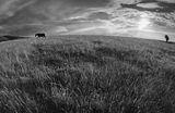 Земя на самота ; comments:38