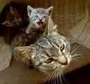Мамо, мамо! Искам на Еверест! ; comments:4