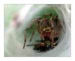 Прегръдката на паяка ; comments:15