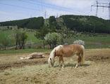 коне ; comments:6
