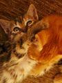 Котенца ; comments:1