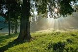 Утро в гората ; comments:22