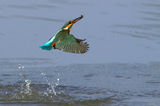 рибарчето с рибката ; comments:18