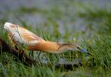 Дъждовен ловец ; comments:31