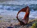 Арфата на морето ; comments:21