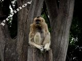 monkey :D ; comments:1