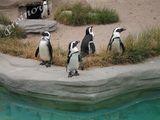 пингвини :) ; comments:2