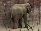 слонче... ; comments:3