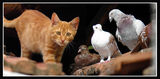 Пазачът на гълъби ; comments:24