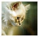 Wild cat :) ; comments:7