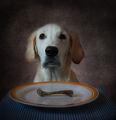 Натюр куче и морт кокал ; comments:74