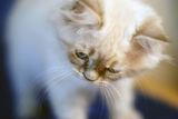 kitten ; comments:2