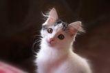 котът ; comments:5