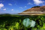Reefscape ; Comments:58
