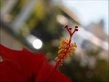 Dad's fleur ; Comments:7
