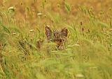 очите на хищник ; comments:29