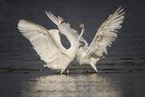 балет в бяло ; comments:54