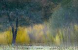 Малко сбъркана есен ; comments:27