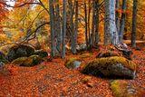 Иде есента ; comments:14