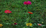 FLOWERS ; comments:6