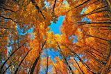 В златната гора ; comments:40