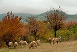 Любопитството краси овцата ; comments:7