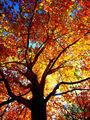 autumn in colors ; comments:1