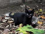 Котешки езичета ; comments:3