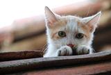 Малък, сладък, пухкав и позира... ; comments:6