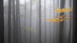 Mistical forest ; Comments:23