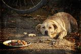 кучешки живот... ; comments:20