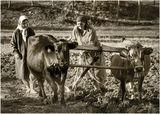 Апотеоз на съвременната аграрна политика в Родопа - 5.11.2010 ; comments:22