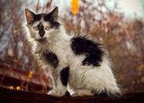 Мръсно коте ; comments:8