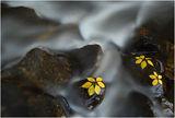 Водни Цветя ; comments:26