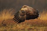 eagle flight ; Comments:35