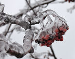 След леден дъжд... ; comments:2