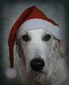 Весели празници!! ; comments:65