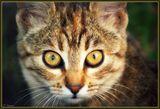 котенце ; comments:2