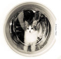 Clean cat ; comments:4