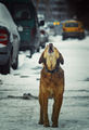 когато на улично куче му е кофти това е блус ; comments:41